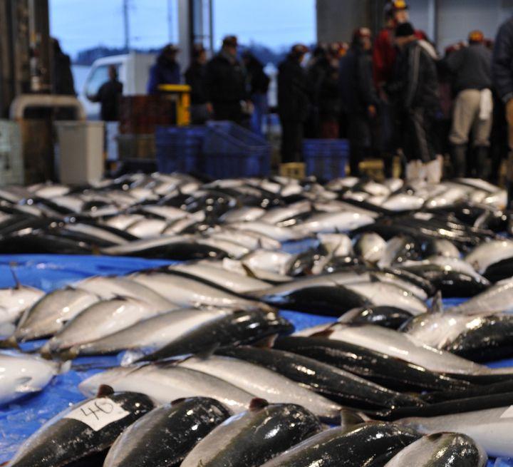 氷見漁港では、平日と土曜日の朝6時頃から活気あるセリを見学することができます。料金は無料で、予約は不要。指定日はお休みだったり、見学のルールもあるので下調べが必要ですが、ブリを筆頭に大きな魚が次々に運ばれてくる様は圧巻です。