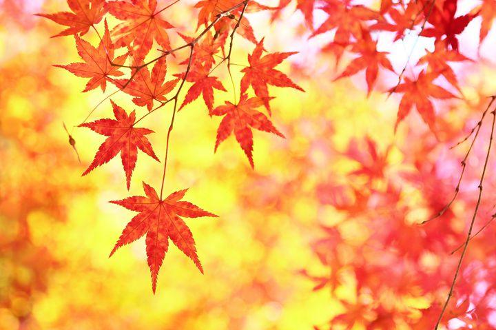 秋を満喫!ステキすぎる長野の紅葉名所ランキングTOP5