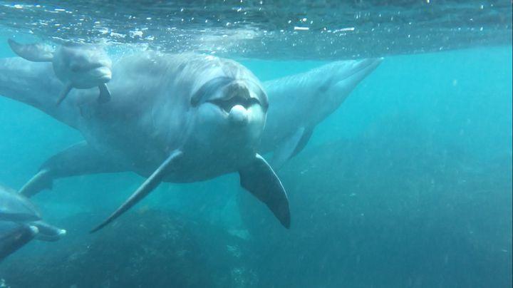 週末旅で野生のイルカと会える『御蔵島』の魅力