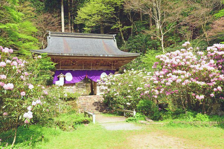 """もののけ姫のモデルは""""京都""""にあった!不思議なパワーを持つ「志明院」とは?"""