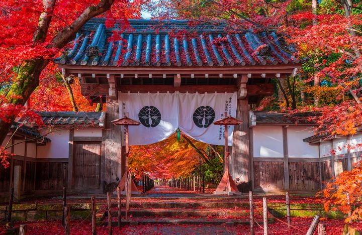 【京都の紅葉スポット】定番から穴場まで、京都通が教える厳選20スポット!