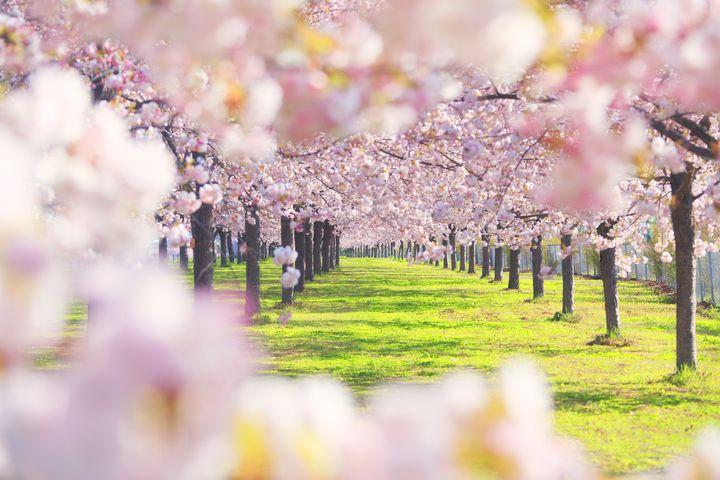 風景と不思議とグルメが素敵!春といえば行きたい遠野の桜スポット5選