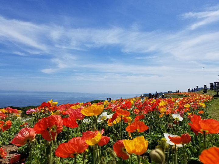 初夏のおでかけに!関西地方の「5月~7月が見頃」な花畑スポットまとめ