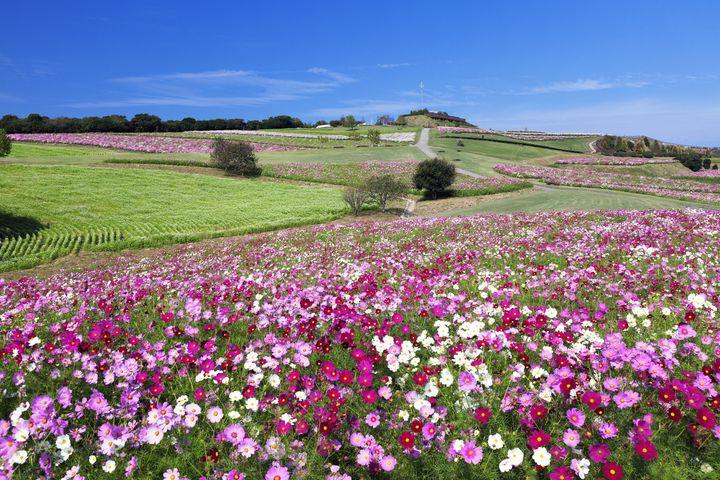 淡路島の絶景スポット「淡路島花さじき」で楽しむ5つのこと