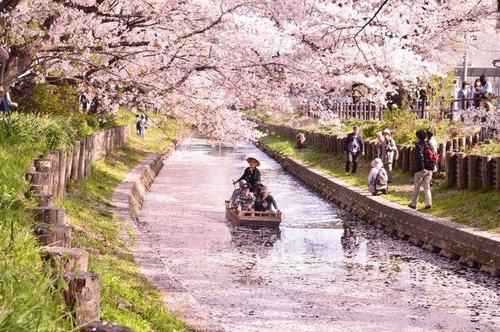 春の旅行先におすすめ!今から旅行を予約すべきな日本国内の一度は見たい桜10選