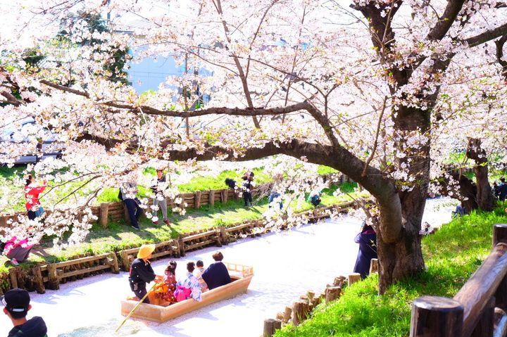 グルメフェスから桜まで!東京都内近郊の春のおすすめイベント10選