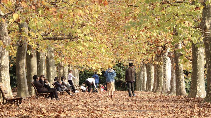 秋が一番じゃない?都内近郊でピクニックをするなら今だ!7選