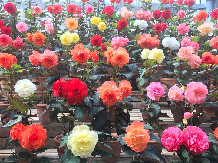 【終了】800種類4000本が咲き誇る!なばなの里の「バラ園」に行きたい