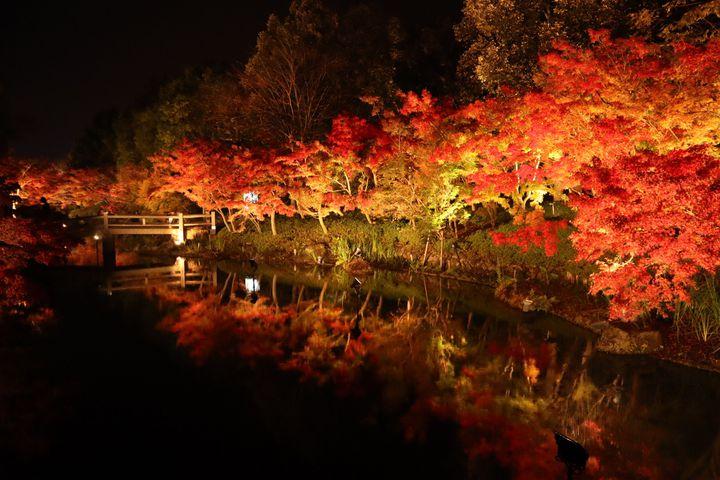 大切な人と行きたい!三重県の紅葉の名所「なばなの里」で幻想的な紅葉を楽しむ