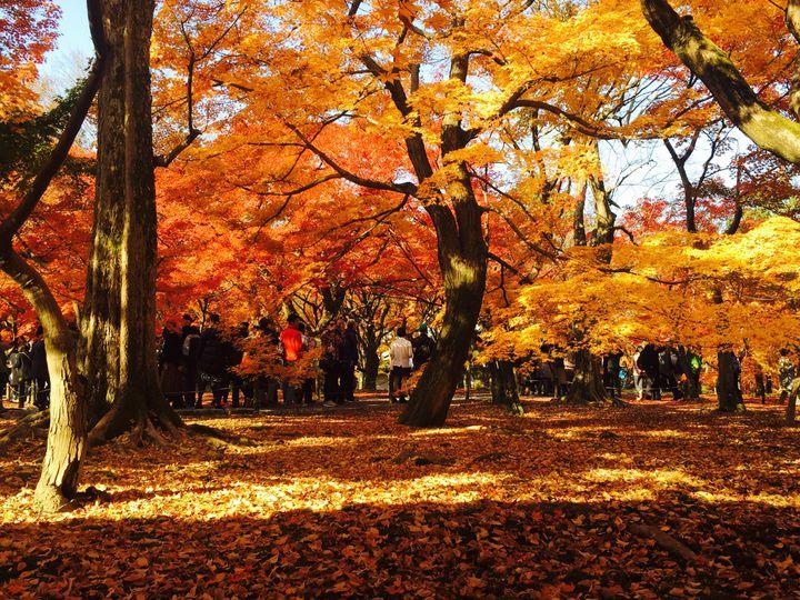 日本らしい秋を楽しみたい!京都の紅葉定番スポットVS新定番スポット4番勝負