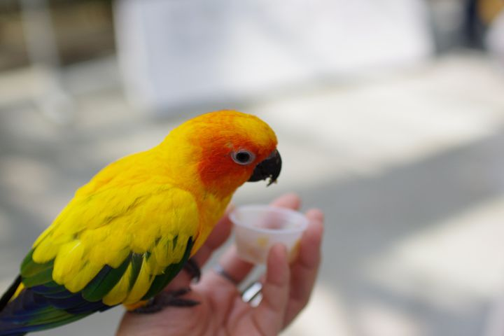 花と鳥のコラボレーション!静岡「掛川花鳥園」でしたい7つのこと