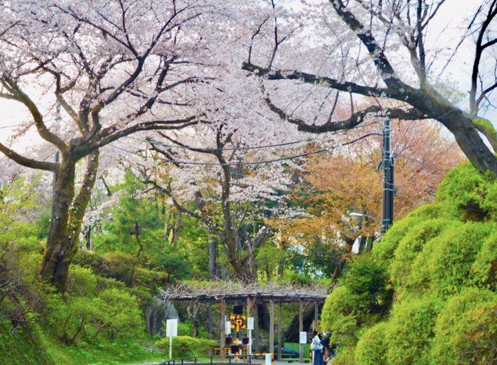 観光もグルメもインスタ映えも!?小田原で大満足な1日デートプラン