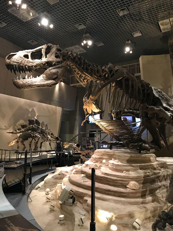発見と想像の時間にワクワクしよう!「国立科学博物館」を楽しむ7つのこと
