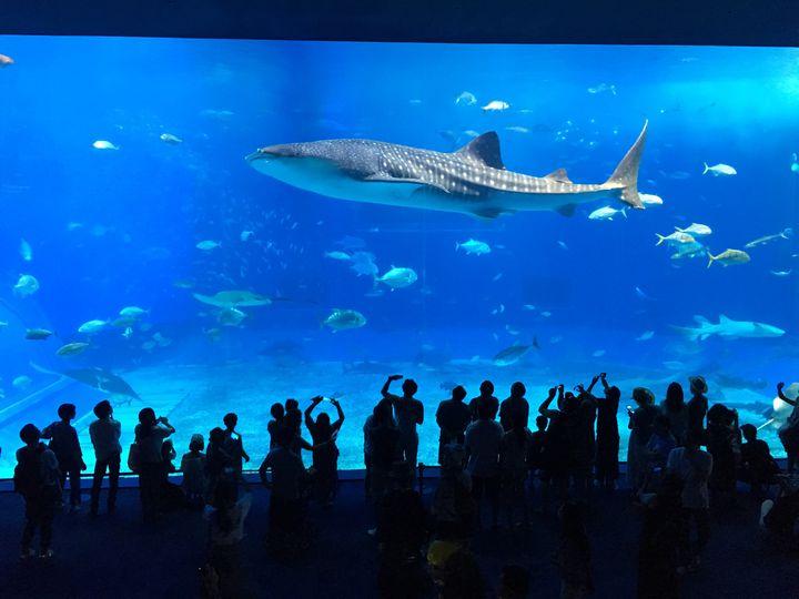 「沖縄美ら海水族館」を満喫する5つの方法!定番スポットを徹底解説