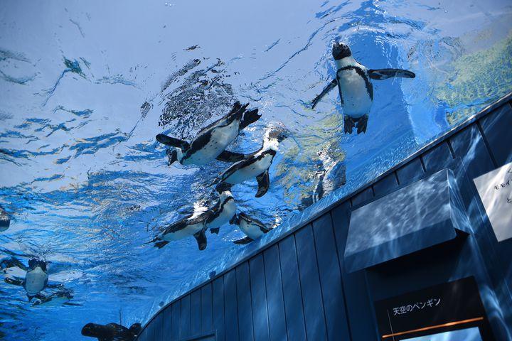 まるで都会のオアシス!「池袋サンシャイン水族館」の楽しみ方10選