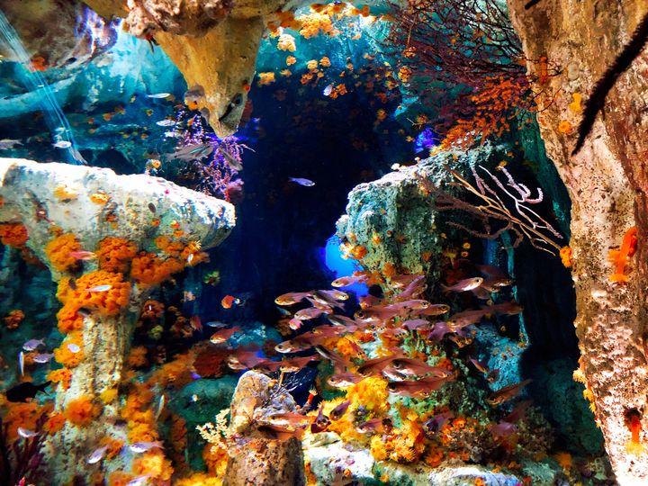 梅雨の時期にもおすすめ。エンタメ空間広がる東京近郊の水族館9選