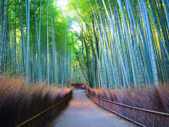 """ちょっぴり大人な癒され旅。""""母娘で行く""""京都1泊2日プランはこれだ"""