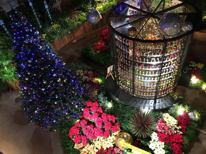 イルミネーション×花!「チューリップ四季彩館 季節を彩る花々~クリスマス~」開催