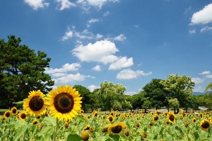 """花火からライトアップまで夏を満喫。関西周辺の""""今週したいこと""""10選"""