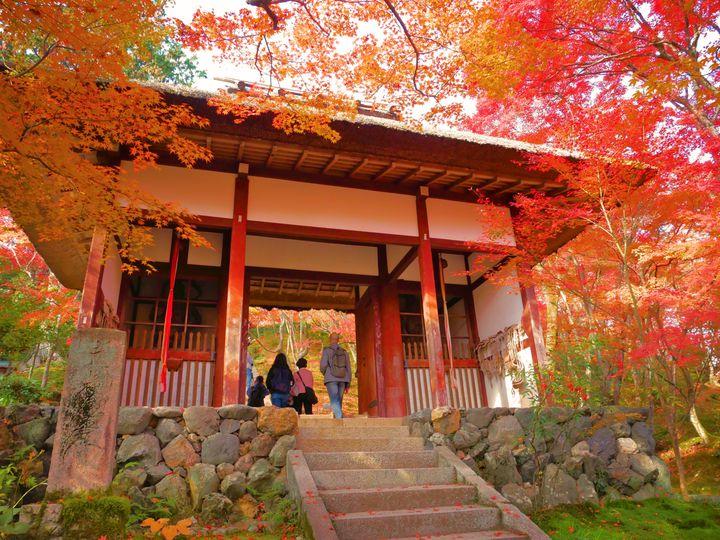 京都の秋はここで満喫!嵐山・嵯峨野を巡る秋のお出かけ一日プランはこれだ