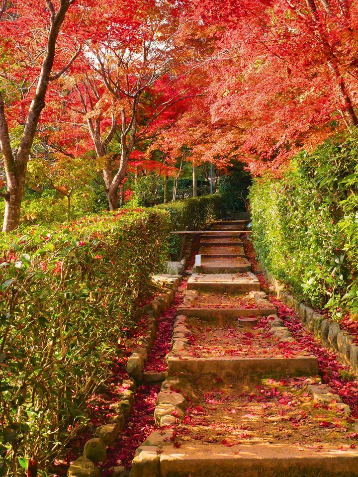 """秋は紅葉を見上げるだけ?この秋行きたい""""秋の絨毯スポット""""9選 ..."""
