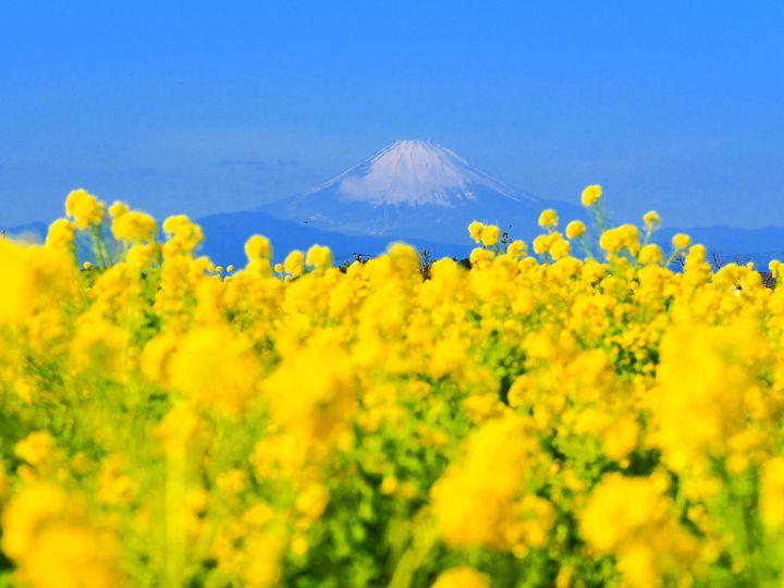 隣に乗せるのは君がいい。東京発の冬におすすめな日帰りドライブデートプラン