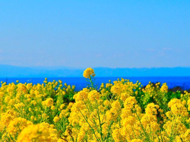 """春はすぐそこに。ドライブで行きたい""""関東地方の今週したいこと""""7選"""