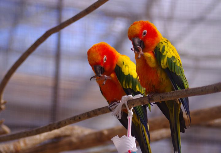 ハンバーガー食べ鳥と触れ合う!「#静岡ドライブ」で行きたい7つの魅力満点スポット