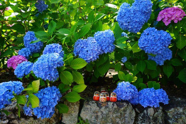 """雨でもお出かけしたくなる!関西にある""""梅雨の季節を彩る""""紫陽花スポット9選"""