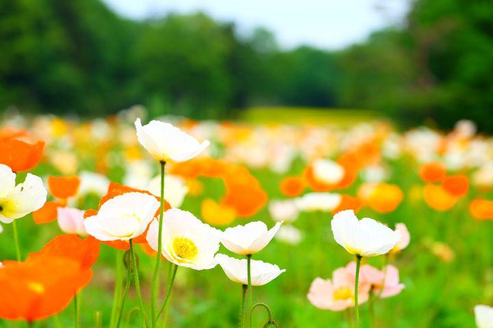 話題の最新スポットや桜も!春のおでかけに「関東地方の今週したいこと」7選