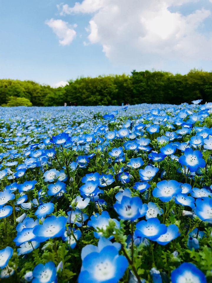 今度の休日に行きたい!「埼玉県」のオススメ定番おでかけスポット10選
