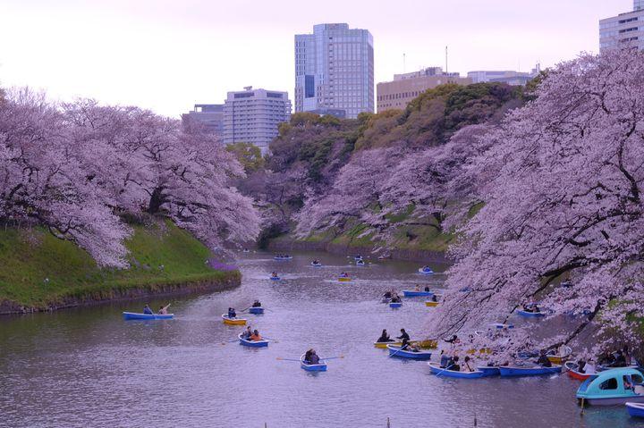 この春行きたい桜まつり!東京都内の桜まつりが行われるスポット9選