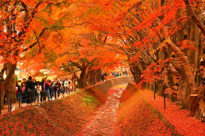 休日がマンネリ化しているあなたへ。日帰りで行ける「秋の山梨」でしたい9つのこと