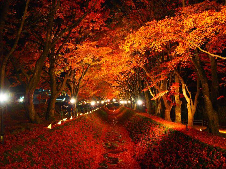 忘れられない絶景がここにある。山梨県で「河口湖畔紅葉まつり」開催