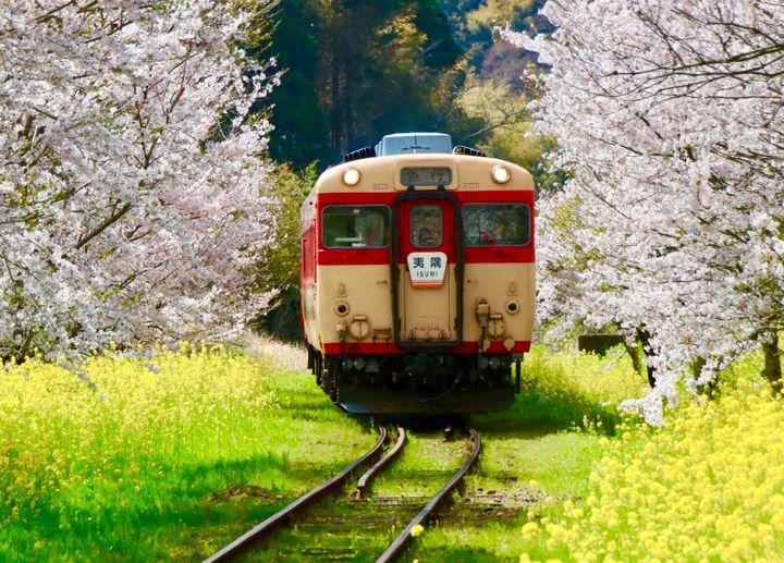 記憶に残る花畑!この春に関東で行きたい絶景のお花畑スポット7選
