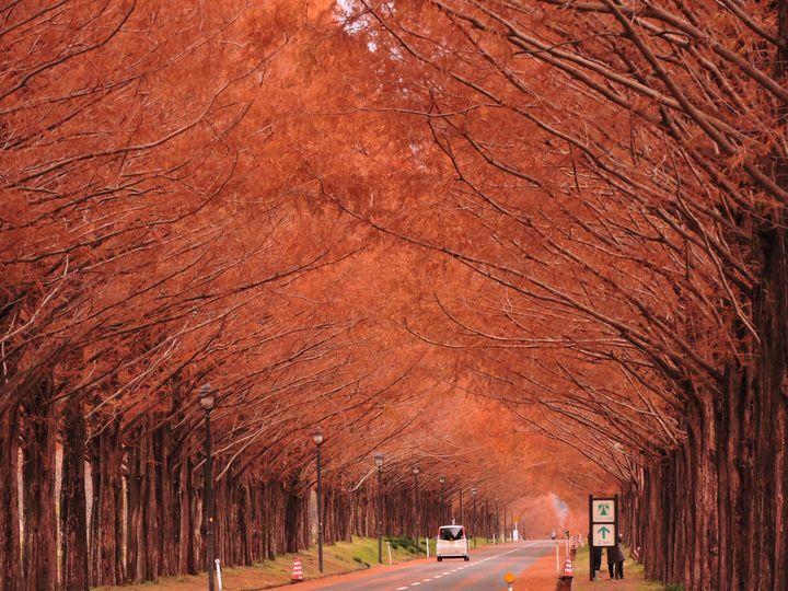 紅葉と食を満喫するドライブを。秋を味わえる滋賀の1泊2日旅行プラン