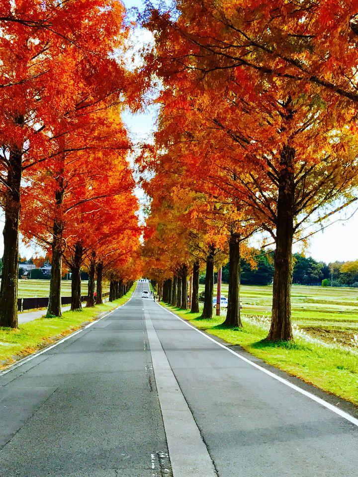 今年の秋に行きたいのはどこ?2018年秋人気急上昇の旅行先ランキング