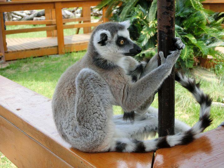 猿しかいない動物園?「日本モンキーパーク」でしたい7つのこと