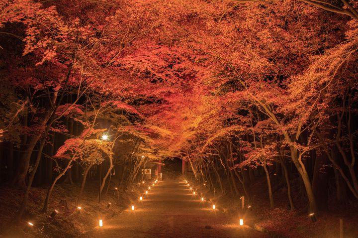 """2020年、秋、京都。""""極上の秋旅を楽しむ""""京都のスポットまとめ"""