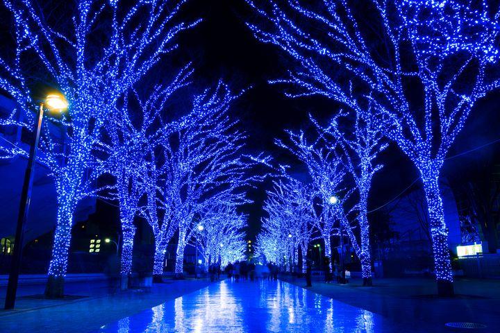【開催中】60万球が青く輝く!今年も渋谷に「青の洞窟」登場