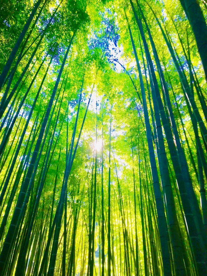 """この夏""""おひとり様旅""""でいきたい!日本全国のおしゃれ観光スポット11選"""