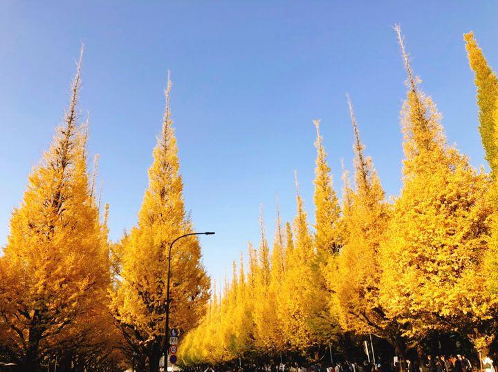 秋なので紅葉を観に行きます。この秋行きたい絶景紅葉スポット集