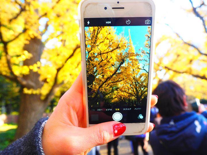 """あと少し、秋の魅力に滑り込み。新宿周辺の""""秋の週末お出かけ&グルメ""""スポット7選"""