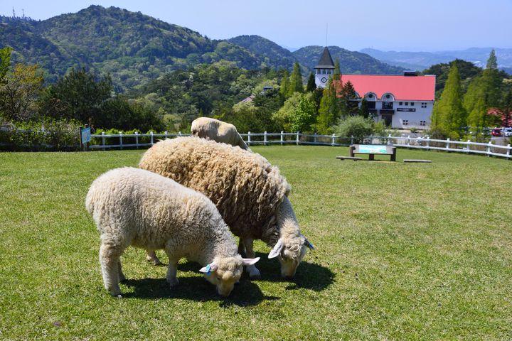 楽しいがしぼりたて!神戸「六甲山牧場」でしたい5つのこと