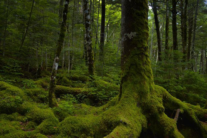 大自然に囲まれた八ヶ岳観光を心ゆくまで満喫!八ヶ岳観光10選!