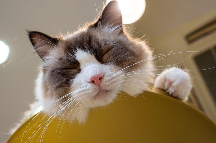 可愛すぎて癒される!関西でおすすめの「動物カフェ」15選