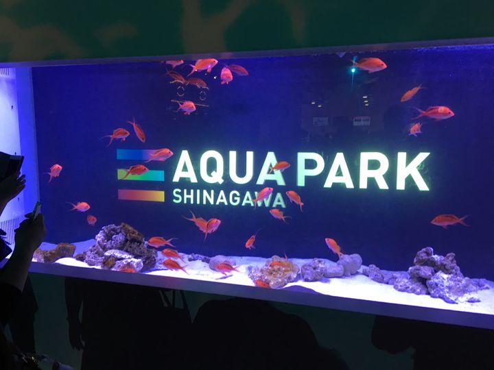 「アクアパーク品川」の7つの楽しみ方!愛を深める水族館デートにしよう
