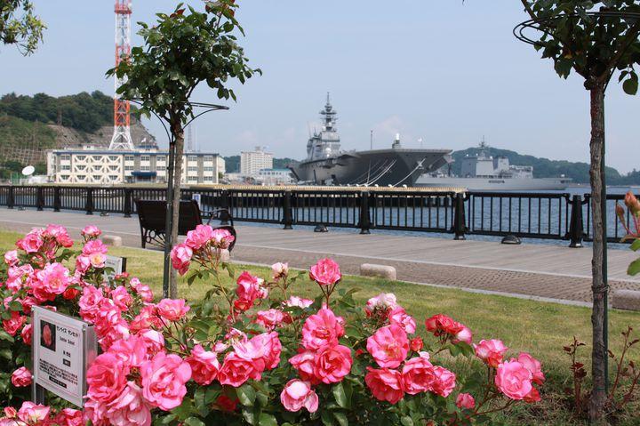 自然いっぱいの町をお散歩しよう!「横須賀」のおすすめデートスポット12選