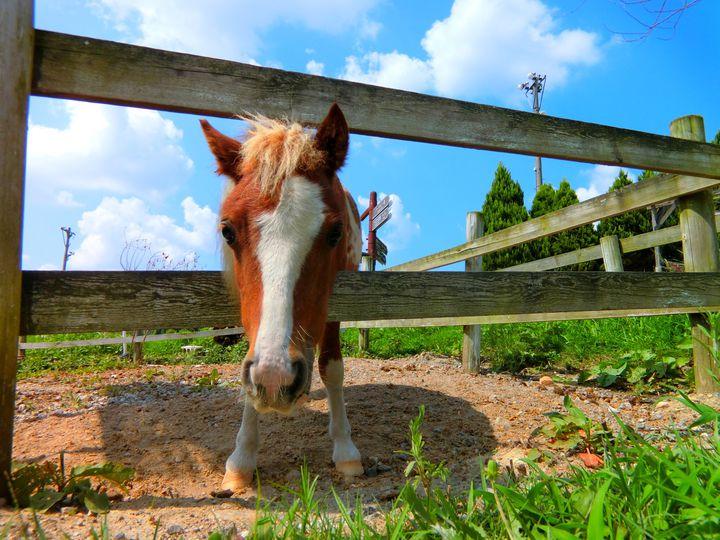 入場無料の癒しの牧場!愛知牧場で絶対に体験したい5つのこと