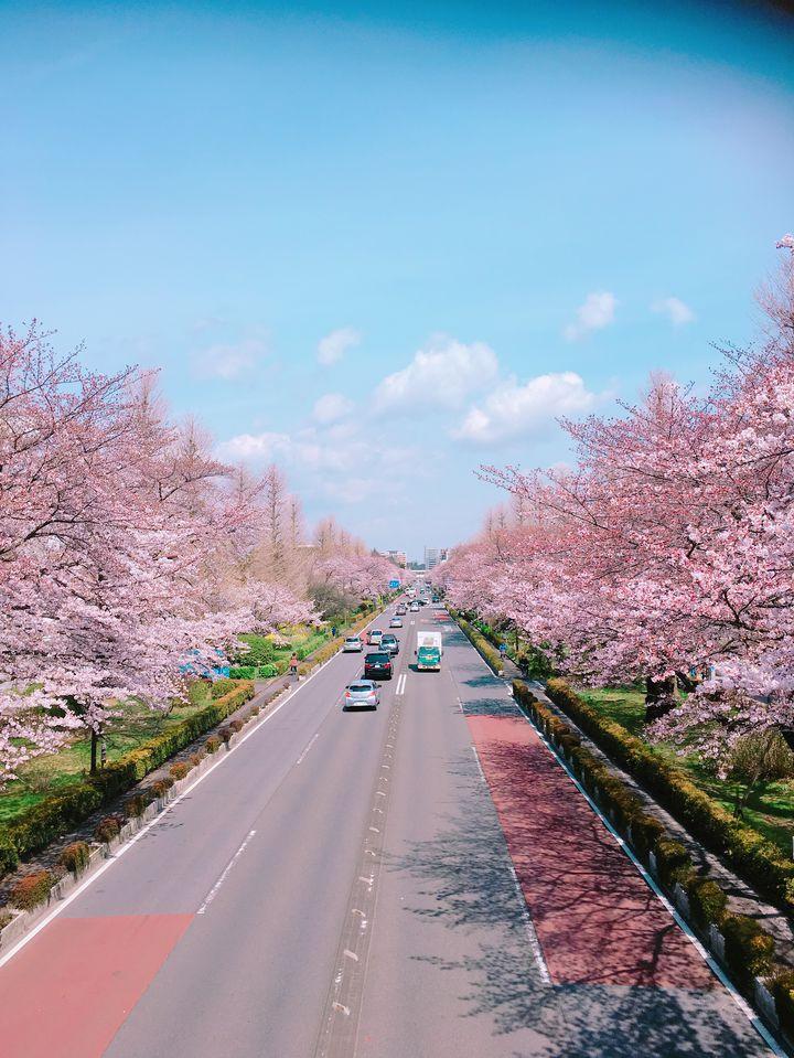 東京にいながら美しい自然を肌で感じる。「国立市」の観光スポット5選 ...